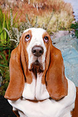 DOG 14 NR0022 01