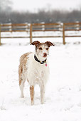 DOG 14 NR0025 01