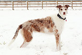 DOG 14 NR0026 01