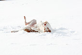 DOG 14 NR0027 01