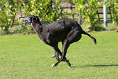 DOG 14 NR0031 01