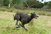 DOG 14 NR0032 01