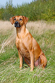 DOG 14 PE0001 01