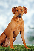 DOG 14 PE0003 01