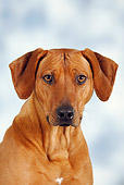 DOG 14 PE0004 01