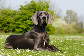 DOG 14 PE0012 01
