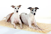 DOG 14 PE0013 01
