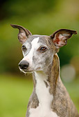 DOG 14 PE0015 01
