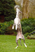 DOG 14 PE0017 01