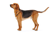 DOG 14 PE0020 01