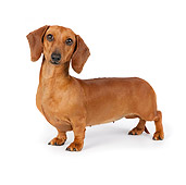 DOG 14 RK0027 01