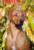 DOG 14 SS0001 01