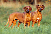 DOG 14 SS0005 01