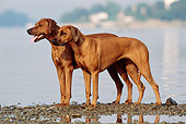 DOG 14 SS0006 01