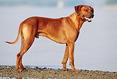DOG 14 SS0007 01