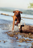 DOG 14 SS0008 01