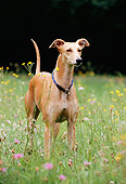 DOG 14 SS0012 01