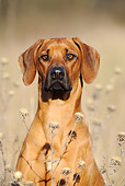 DOG 14 SS0015 01