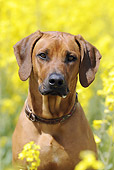 DOG 14 SS0016 01