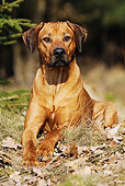 DOG 14 SS0021 01