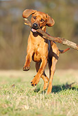 DOG 14 SS0023 01