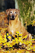 DOG 14 SS0025 01