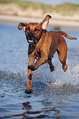 DOG 14 SS0037 01