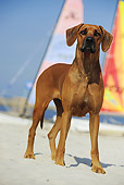 DOG 14 SS0038 01