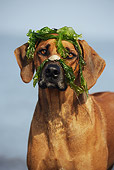 DOG 14 SS0039 01