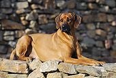 DOG 14 SS0040 01
