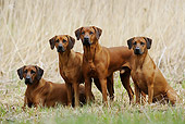 DOG 14 SS0042 01