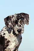DOG 14 SS0046 01