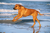 DOG 14 SS0049 01