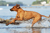 DOG 14 SS0050 01