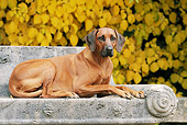 DOG 14 SS0053 01