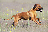 DOG 14 SS0056 01
