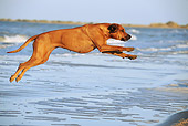DOG 14 SS0058 01