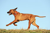 DOG 14 SS0059 01