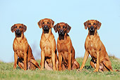DOG 14 SS0060 01
