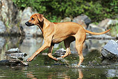 DOG 14 SS0061 01
