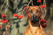 DOG 14 SS0063 01