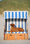 DOG 14 SS0066 01