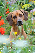 DOG 14 SS0067 01