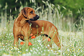 DOG 14 SS0070 01