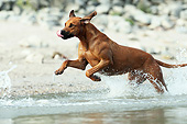 DOG 14 SS0072 01
