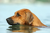 DOG 14 SS0073 01