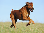 DOG 14 SS0075 01