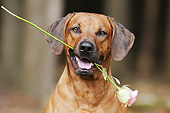 DOG 14 SS0080 01