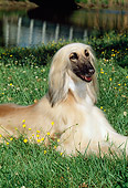 DOG 14 CE0001 01