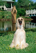 DOG 14 CE0002 01